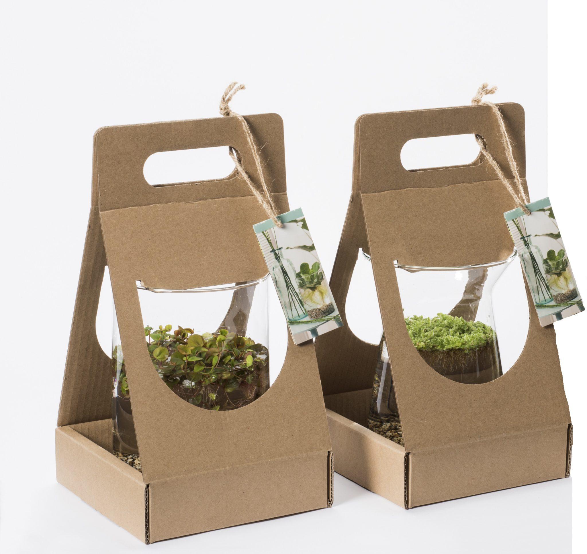 20710 Mix drijfplanten
