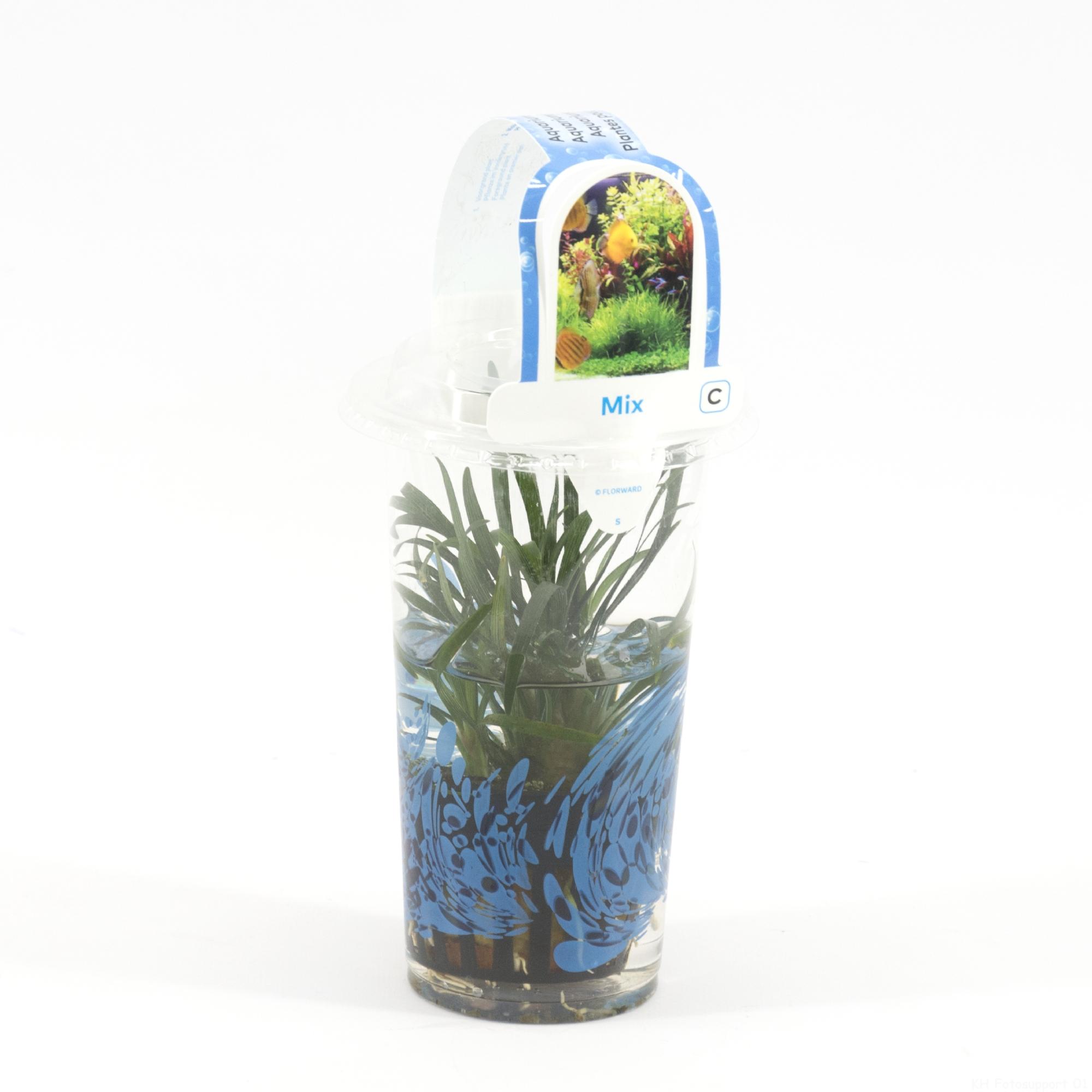 Aquariumplanten mix in beker small